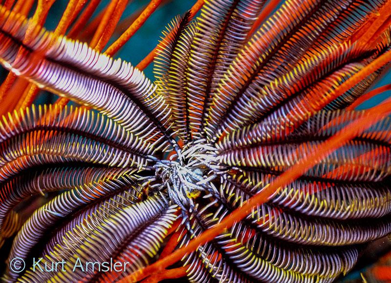 ReefArt__62.jpg