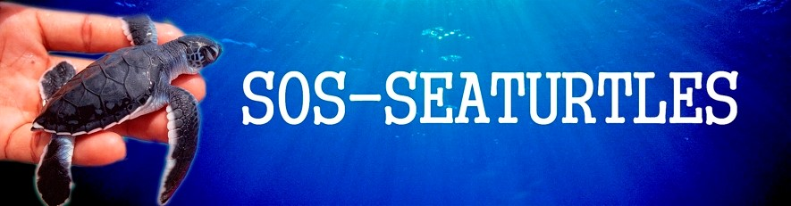 sos-seaturtles