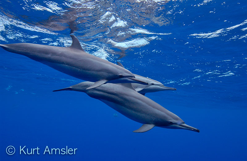 Dolphin Whales-